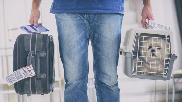 Viajantes buscam cada vez mais se adaptar as normas para conseguir ter a companhia de seus animais em suas viagens - Foto: Reprodução