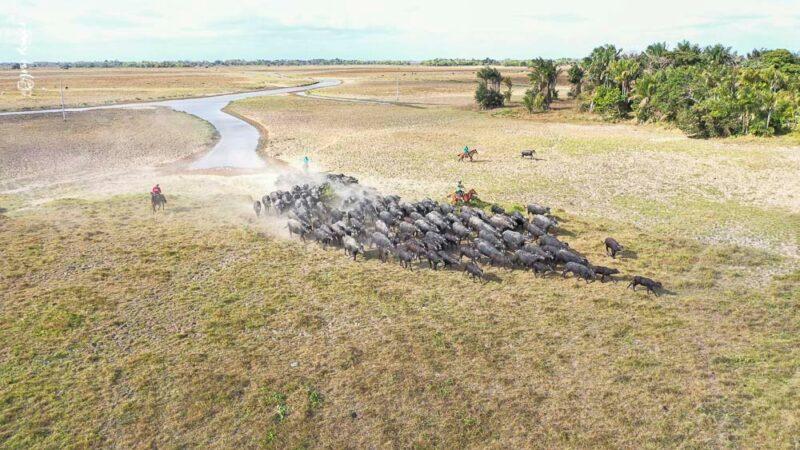 Ilha de Marajó - uma ilha costeira do tipo fluviomarítima situada na Área de Proteção Ambiental do arquipélago do Marajó, no estado do Pará - Foto: João Ramid